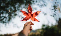 C'est officiel : le Canada légalise le Cannabis !