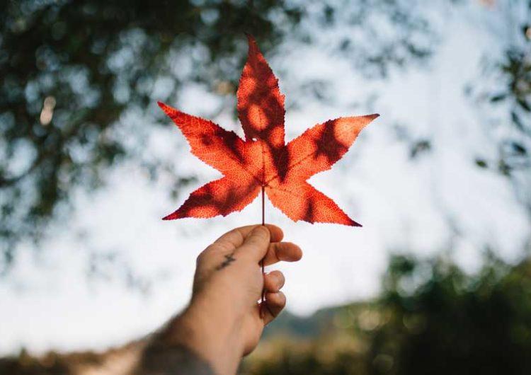 C'est officiel : le Canada légalise le Cannabis ! Lecture : 2 min