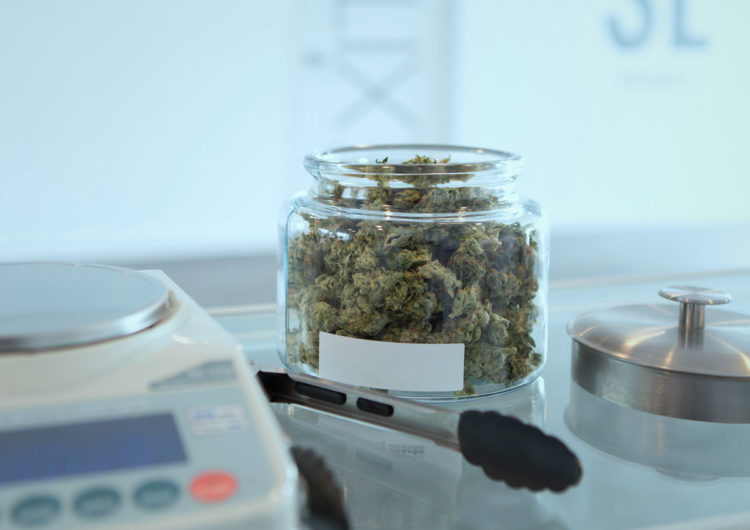 Le cannabis légalisé suivi à la trace Lecture : 2 min